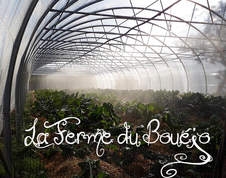 serre du Bouéjo